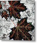 Maple Mania 17 Metal Print