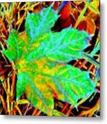 Maple Mania 21 Metal Print
