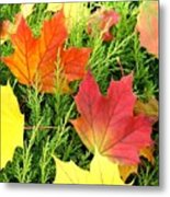 Maple Mania 5 Metal Print