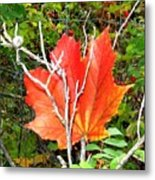 Maple Mania 6 Metal Print