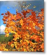 Maple Mania 8 Metal Print