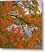 Maple Over The River Metal Print