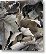 Maple Salad Metal Print