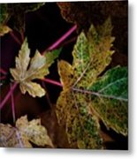 Maple Spatter Metal Print