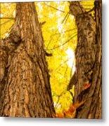 Maple Tree 3 Metal Print