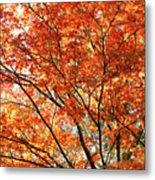 Maple Tree Foliage Metal Print