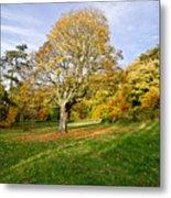 Maple Tree On The Slope. Metal Print