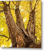 Maple Tree Portrait Metal Print