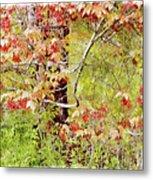 Maple Tree W C  Metal Print