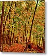 Maple Woods Trail 2 Metal Print