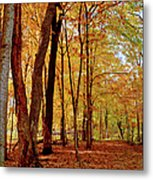 Maple Woods Trail 3 Metal Print