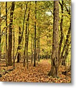 Maple Woods Trail Metal Print