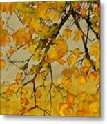 Maples In Autumn Metal Print by Carolyn Doe