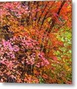 Maples In Pink Metal Print