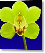 Mapplethorpe Flower Metal Print