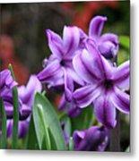 March Hyacinths Metal Print