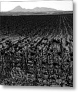 March Of The Sunflowers Metal Print