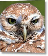 Marco Burrowing Owl - I Know What You're Thinking Metal Print