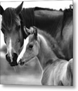 Mare And Foal In Black And White Metal Print
