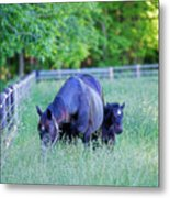 Mare And Foal In Shadows Metal Print