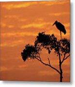 Maribou Stork On Tree With Orange Sunrise Sky Metal Print
