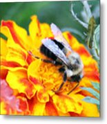 Marigold And The Bee Metal Print
