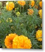 Marigold Light Metal Print
