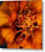 Marigold On Blue Metal Print