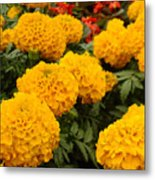 Marigold Party Metal Print