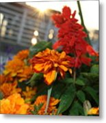 Marigold Sunshine Metal Print