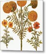 Marigolds, 1613 Metal Print