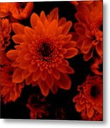 Marigolds In Orange Light Metal Print