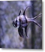 Marine Fish Metal Print