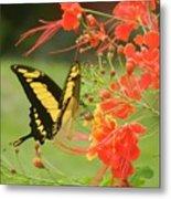 Mariposa Amazonica Metal Print