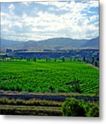 Marlborough Wine Country Metal Print