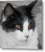 Marley Cat Meowning Metal Print