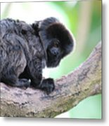 Marmoset Sitting Perched In A Tree Metal Print