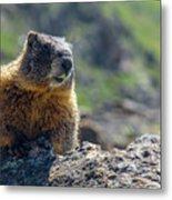 Marmot On The Ridge Metal Print