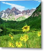 Maroon Sunflowers Metal Print
