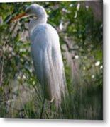 Marsh Heron Metal Print
