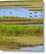 Marsh Tide Pool Metal Print