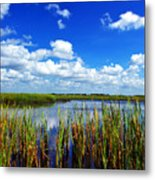 Marsh Lands Metal Print