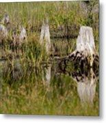 Marshland Reflections Metal Print