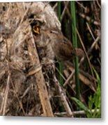 Marshy Nest Metal Print