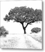 Marula Tree Metal Print