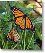 Marvelous Monarchs Metal Print