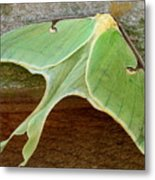 Maryland Luna Moth Metal Print