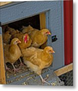 Aunt Mary's Chickens Metal Print
