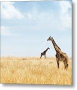 Masai Giraffe In Kenya Plains Metal Print