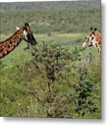 Masai Mara Giraffe Metal Print